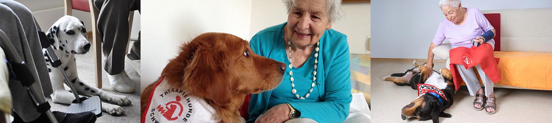 welche hunde eignen sich als therapiehunde
